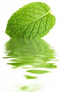 Menthe : quelles sont les vertus de cette plante médicinale ?